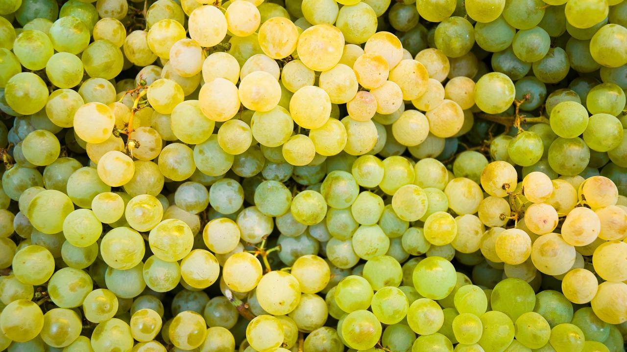 White wine grapes